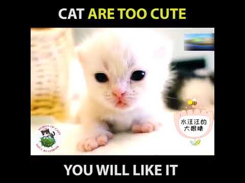 Funny Cats and Cute Kittens Playing Compilation for laugh | USA, UK, Canada | AMAZING CHANNEL