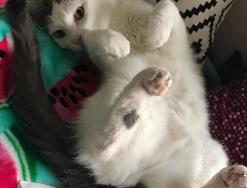 My girl Hollybelle, who always lets me touch her tummy!