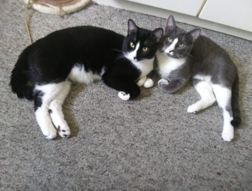 I think it's safe to say that these brothers love each other. World, meet Cain (left) and Jack (right).